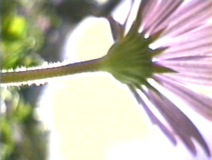 "Footage from a bug's perspective is seen in ""Research."""