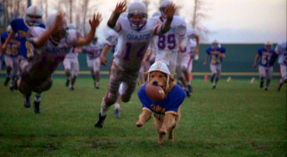 Gee, I wonder if the Giants defense will catch and tackle Buddy the dog.