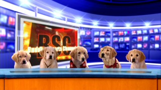 "Just what fans of ""Air Bud 2"" have long wanted: the Buddies give a sport report on the film's football action. From left to right, they are Rosebud, B-Dawg, Budderball, Mudbud, and Buddha."