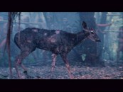 This injured deer is the focus of the short, lone deleted scene.