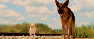 Chloe makes a friend and protector in Delgado, a German Shepherd with Andy Garcia's voice and a secret past.