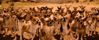A large gathering of Chihuahuas come to our protagonists' rescue in the Mexican desert.