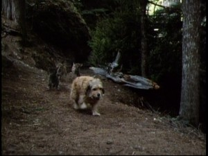 Benji leads his orphaned cougar cub wards around in the scenic Pacific Northwest.