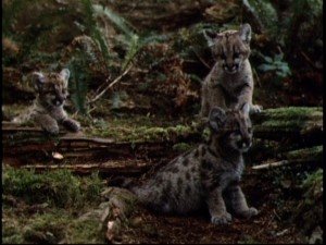 Aw, look at the cute little wild kitties!