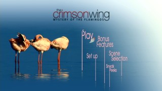 Three flamingos groom themselves on the DVD and Blu-ray's main menu.