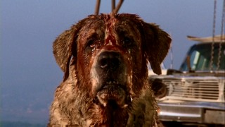 The problem: one fierce, bloody, rabid St. Bernard. Name: Cujo.