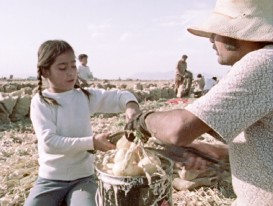 "The Galindo children pick and cut onions alongside their parents in Robert M. Young's 1973 documentary short ""Children of the Fields."""