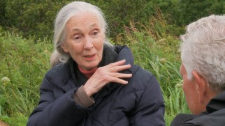 "Jane Goodall declares herself a fan of Disneynature's ""Bears"" in ""The Future of Bears."""