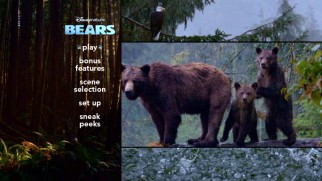 Sky and her cubs brave the rain on the Bears DVD main menu.