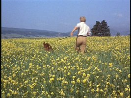 Big Red and Rene run through a field of daffodils.