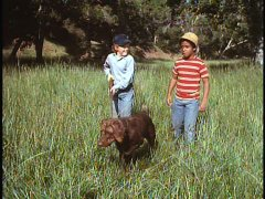 "Lonnie (Johnny Whitaker), Text (George Spell), and Moreover go on a walk in ""The Biscuit Eater."""