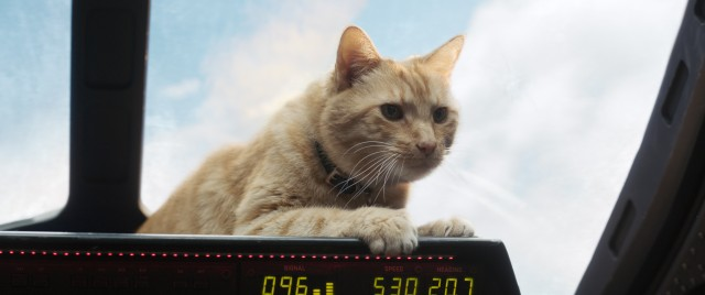 "Goose the cat (who's really a flerken) steals multiple scenes in ""Captain Marvel."""