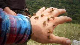 Bees will simply not leave the filmmakers alone in one unbearable African location.