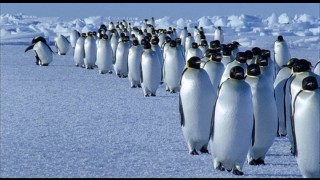 "The march of the penguins, as seen in...""Deep Blue."""