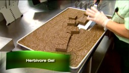 "We get a look at some of the food preparation that goes on at Animal Kingdom in the ""Earth"" Classroom Edition featurette ""Diet and Nutrition."" Mmmm... herbivore gel!"