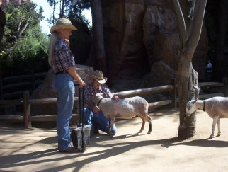Cowhands give attention to the goats at the Little Patch of Heaven Petting Farm, the loneliest place in Disneyland.