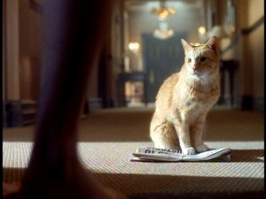 The mysterious orange tabby cat and the enchanted early newspaper simply show up outside Gary's hotel room or wherever else he's staying.