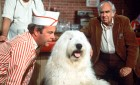 "Tim Conway confers with a shaggy dog who used to be Dean Jones in ""The Shaggy D.A."" This 1976 comedy and its 1959 predecessor are finally coming to DVD next month and in style. Click for the full details."