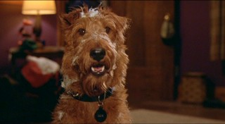 "Movie star turned hero, Dewey (a.k.a. Rexxx) is the titular canine of ""Firehouse Dog."" He's a little dusty in this scene."