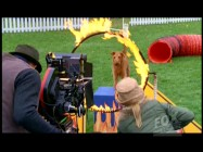 As seen in the Fox Movie Channel episode, filmmakers shoot Dewey the Dog in a dramatic ring of fire jump sequence.