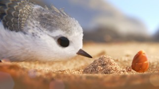 "A timid young water bird gets acclimated with his ocean environment in Pixar's short ""Piper."""