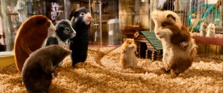 Relocated to an L.A. pet shop cage, the G-Force commandoes meet Bucky (voiced by Steve Buscemi), a defensive critter with suspected ferret ancestry, and Hurley (Jon Favreau), the big carefree type.