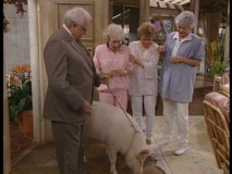 "The girls adopt a pig in ""Bringing Up Baby."""