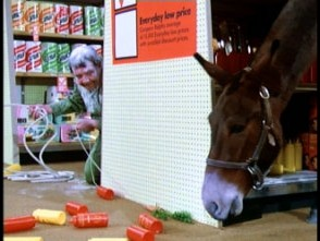Spinner tries to lure the gifted mule amidst paper towels and condiments.