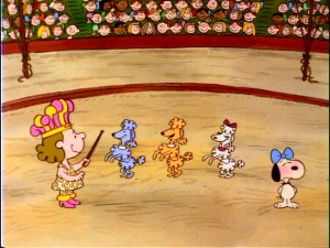 "Miss Polly's well-trained poodles are joined by an embarrassed, blushing, bow-tied beagle in ""Life is a Circus, Charlie Brown."""