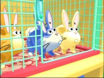 "Cassie's bunnies look quizzically at their open cage in what can only be described as a ""Pet Problem."""