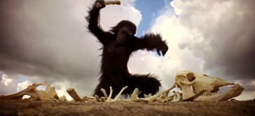 "This ape makes a colossal discovery at the start of ""2001: A Space Odyssey."""