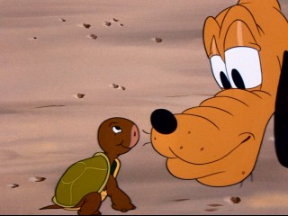 "Pluto's appreciation of this little turtle is short-lived in ""Pluto's Surprise Package."""