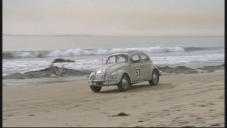 Herbie, look out for that seagull!