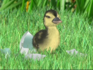 Little Duck is the last of his family to hatch from his shell, and his witnessing of June's duck imitation leads to some complications.