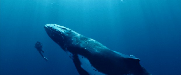 """Whales are big, man."" - Actual thoughts of tiny-looking human next to ginormous humpback whale."