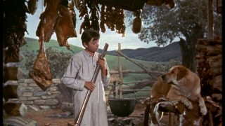 Travis (Tommy Kirk) looks for a reason to shoot Old Yeller (Spike the Dog) between the eyes. What a big man!