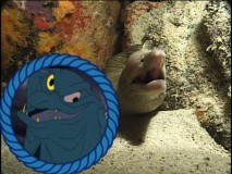 "Ten points if you can tell if that's Flotsam or Jetsam being compared to a real life eel in ""DisneyPedia: Life Under the Sea."""
