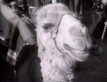 A Maan, Jordan camel gets his close-up in this vintage featurette.