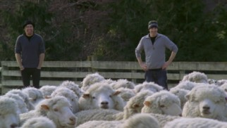 New Zealand's wool industry gives us a rare chance to see something other than skiing: sheep.