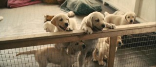 You can't have a film about a dog without some adorable puppies, can you?