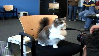 "This fluffy cat auditions (unsuccessfully) for Carlos, the one feline part in the film in ""Canine Casting."""