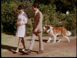 Girl + boy + dog is not all that uncommon for a '60s Disney film.
