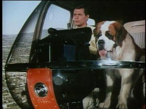 Would a big St. Bernard really make helicopter traffic reports a lot more exciting? You be the judge.