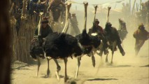 "A group of ostriches show the production team what they're made of in ""Behold the Mighty Ostrich!"""