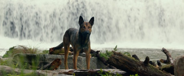 """Max"" tells the story of a PTSD-afflicted Marines dog after he returns home to the US."