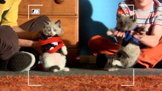 Axl and Brick expect their movies starring adorable kittens and rabbits to go viral.