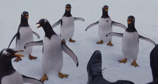 Six inherited Gentoo penguins imprint on Mr. Popper and stay close to him in a snowy Central Park outing.