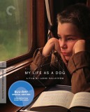My Life as a Dog (1985) The Criterion Collection Blu-ray cover art -- click to buy from Amazon.com