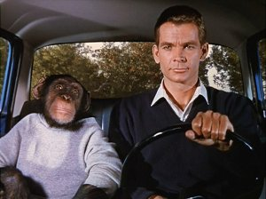 This time, Dean Jones shares the car with a monkey, whose entire face is in the frame.