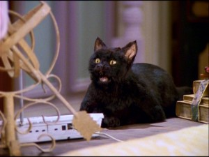 He's a cat, but it wasn't always that way. The Spellmans' talking black American Shorthair Salem Saberhagen (voiced by Nick Bakay) is one funny feline.